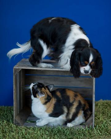 Catdogbox